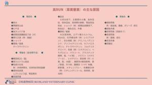 高BUN(尿素窒素)血症の原因